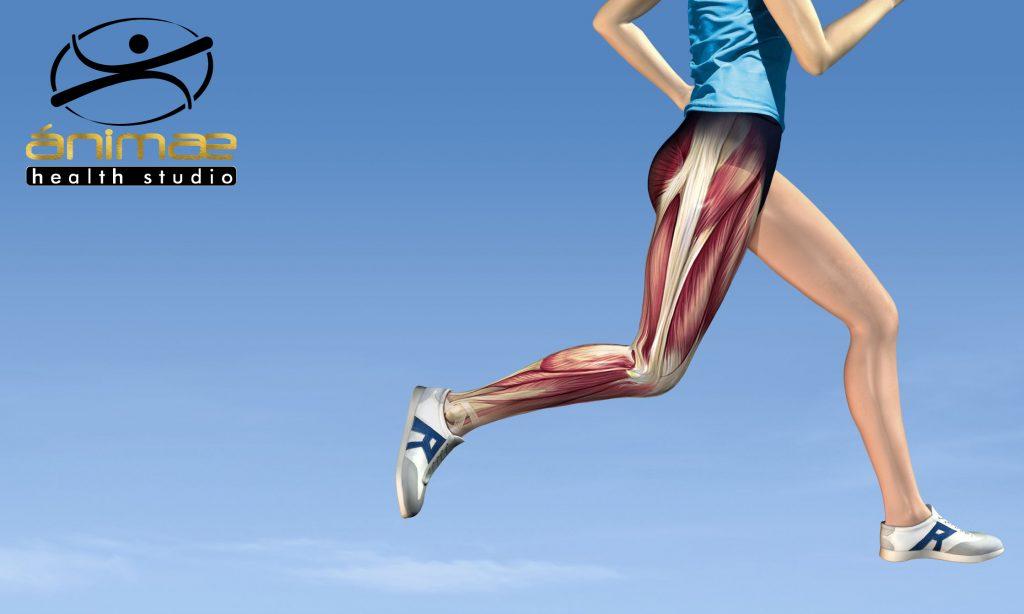 Animae dolor de rodilla